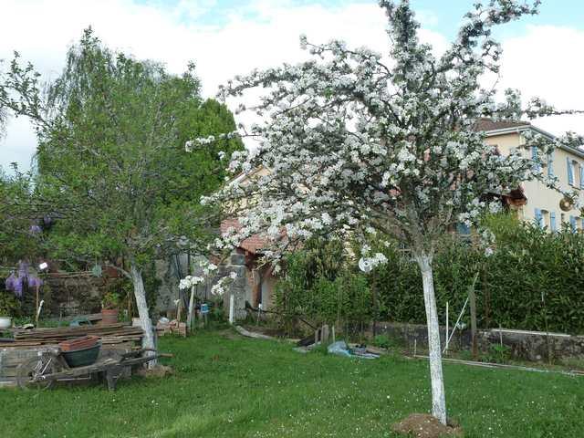 Concours 'Une vue printanière de votre jardin' !!! P1060811