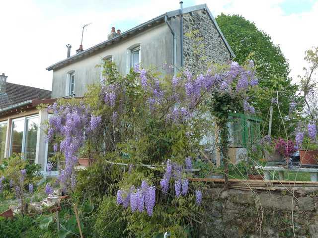 Concours 'Une vue printanière de votre jardin' !!! P1060812