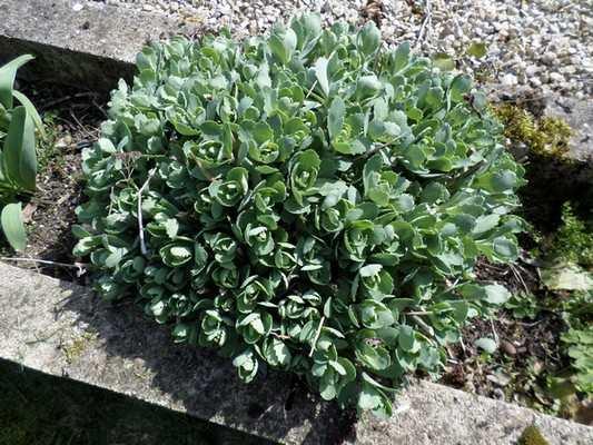 Nom de cette plante Sam_0210