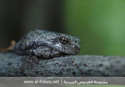 chouf wa7d jrana kat9allad l7irba2 lollll Klghk10