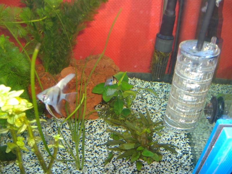 aquarium 240l Dscf0111