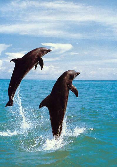 Le dauphin Flippe11