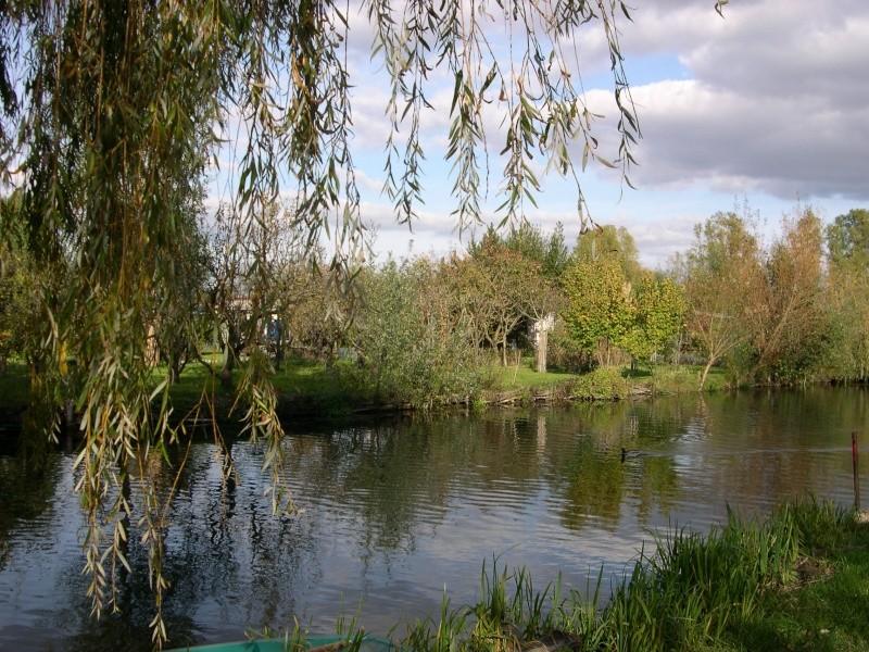 Petite ballade dans les marais de Bourges Dscn3031