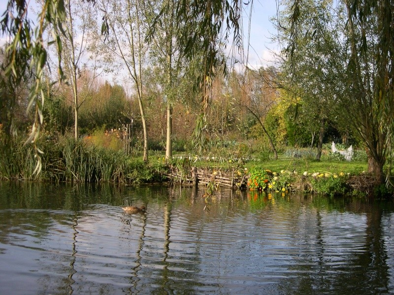Petite ballade dans les marais de Bourges Dscn3034