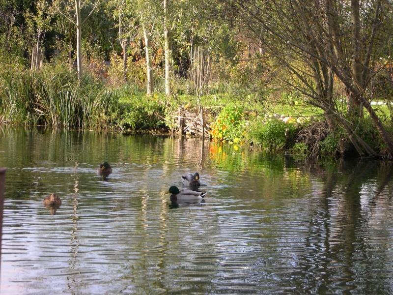 Petite ballade dans les marais de Bourges Dscn3037