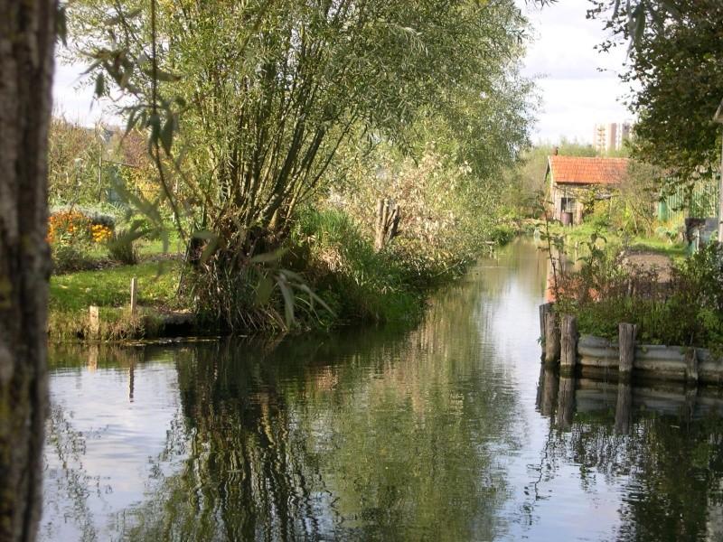 Petite ballade dans les marais de Bourges Dscn3039