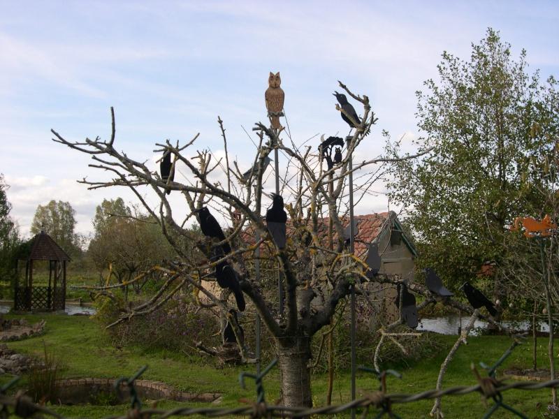 Petite ballade dans les marais de Bourges Dscn3046