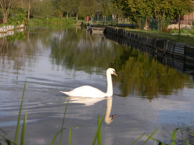 Petite ballade dans les marais de Bourges Dscn3065