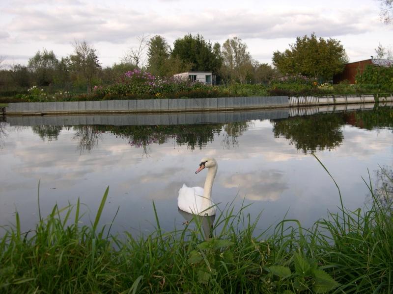 Petite ballade dans les marais de Bourges Dscn3070