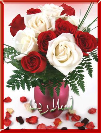Roses Redwhi10