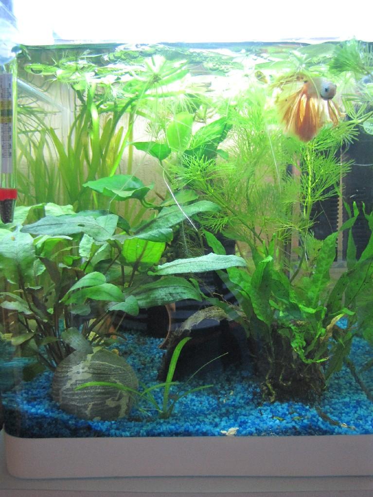 mes trois aquariums 18031510