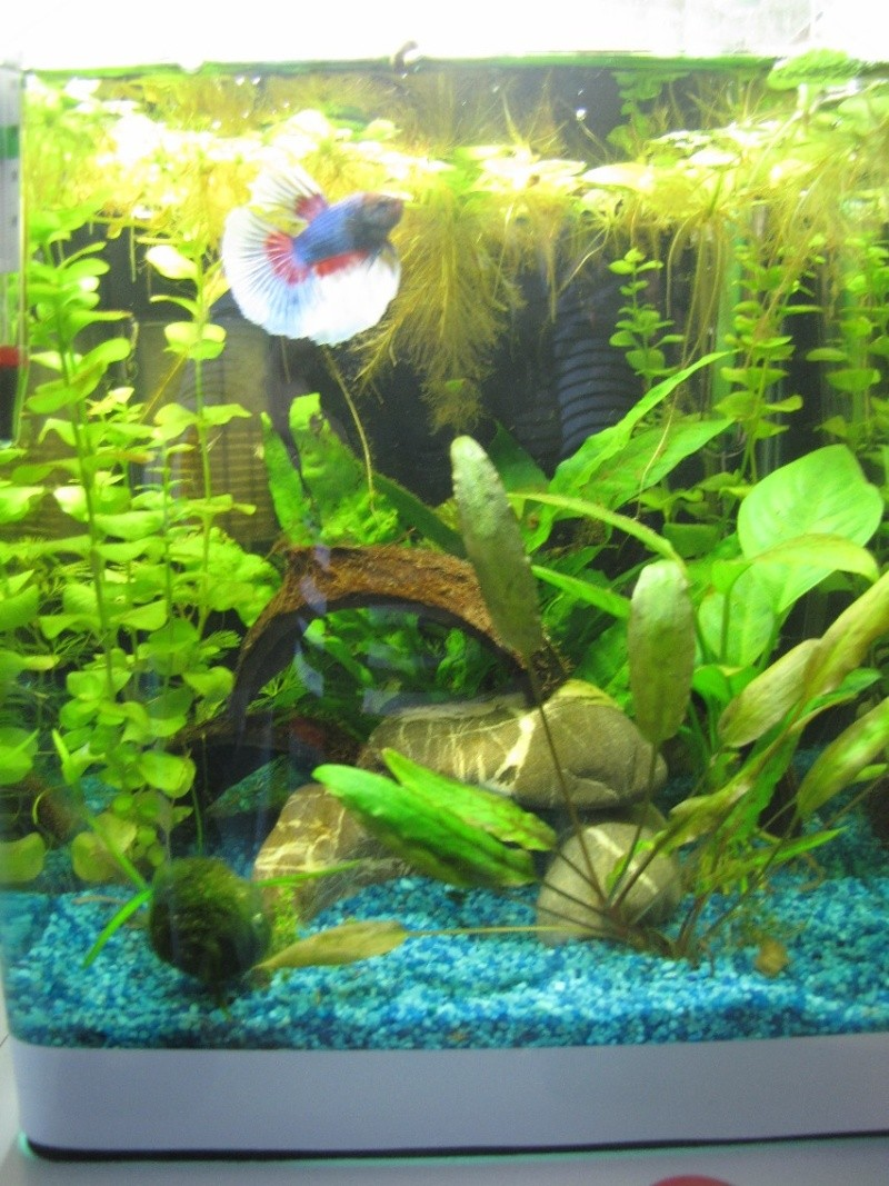 mes trois aquariums 18031511