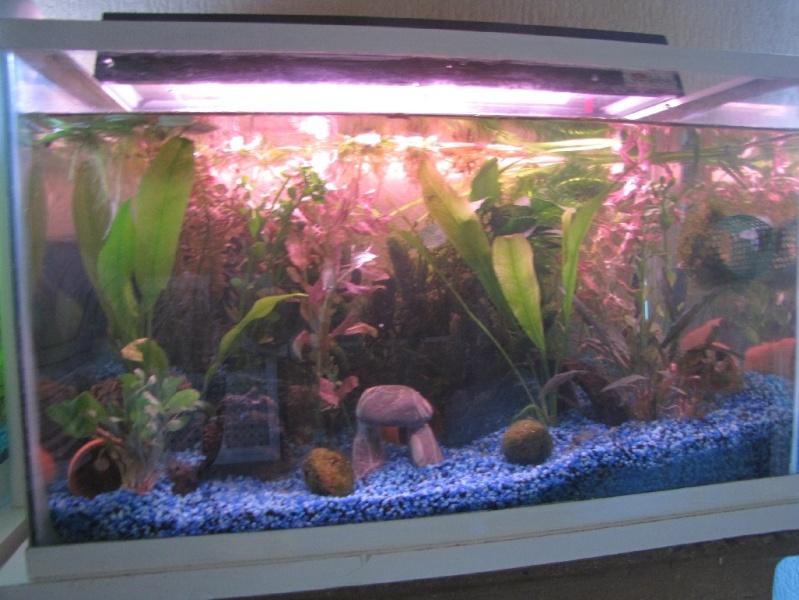 mes trois aquariums 18031512