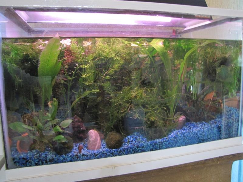 mes trois aquariums 27031510