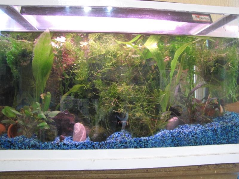 mes trois aquariums 27031511