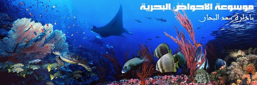 موسوعة الاحواض البحرية - سعد ابو علي البحار -