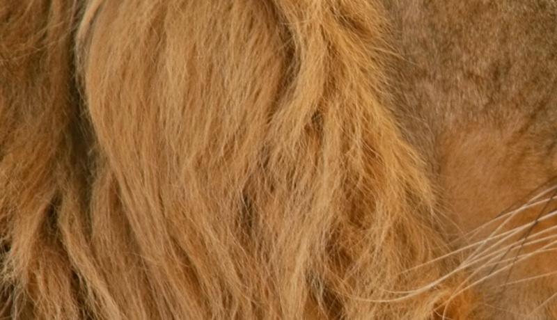 A qui appartient ces cheveux...  Urlrg10