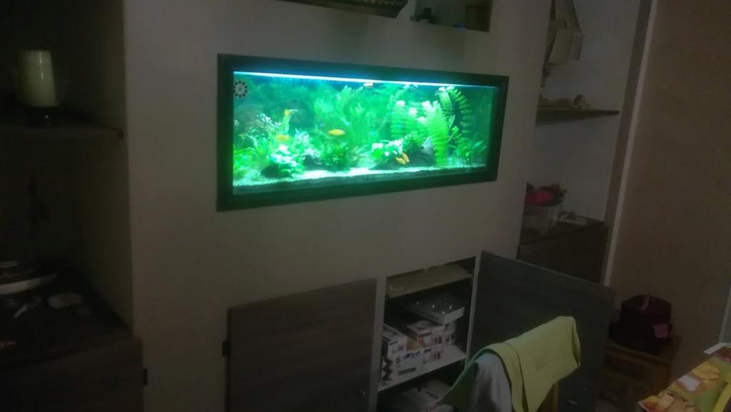 Nouvel aquarium 300l pour la maison Img_2011