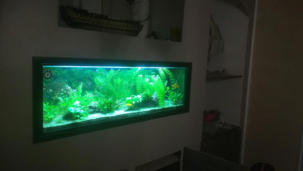 Nouvel aquarium 300l pour la maison Img_2012