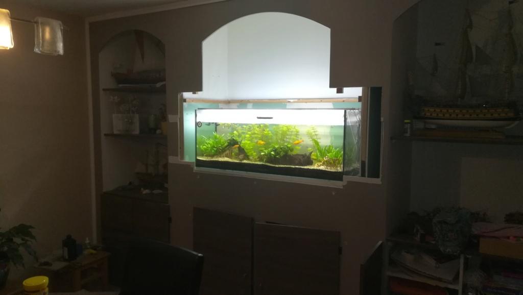 Nouvel aquarium 300l pour la maison Img_2015