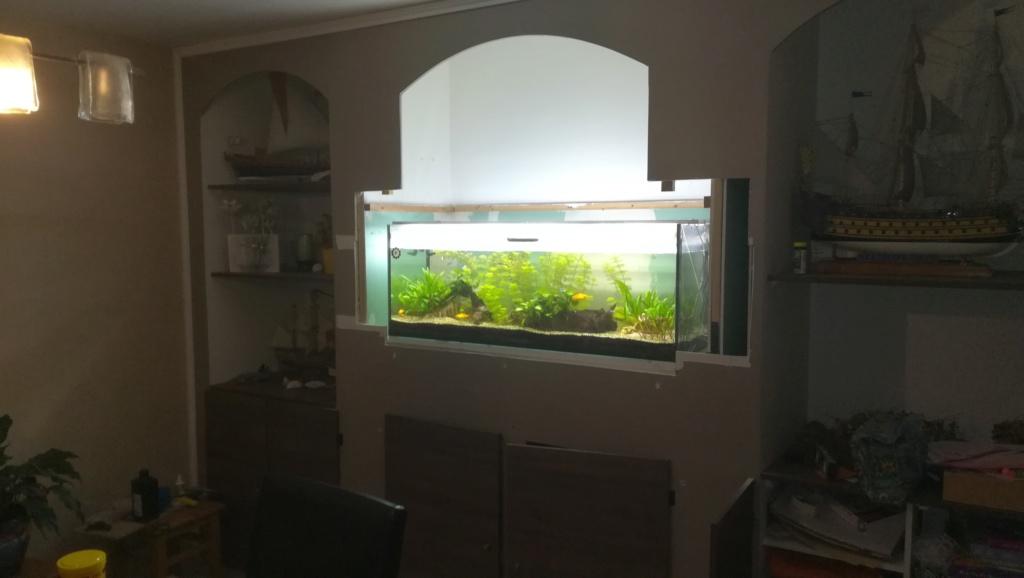 Nouvel aquarium 300l pour la maison Img_2016