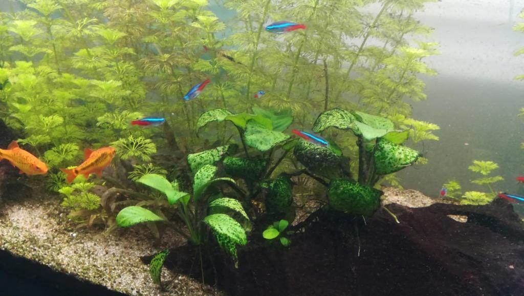 Nouvel aquarium 300l pour la maison Img_2018