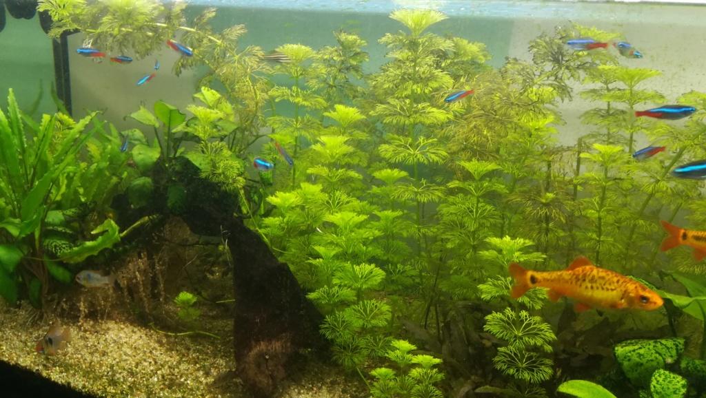Nouvel aquarium 300l pour la maison Img_2019