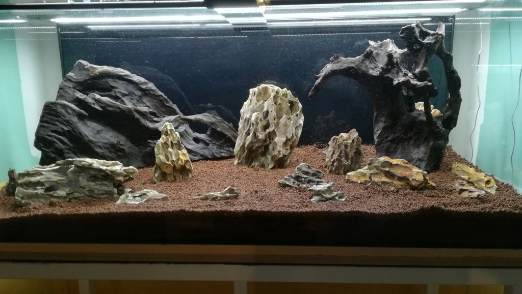Nouvel aquarium 300l pour la maison - Page 3 Img_2036