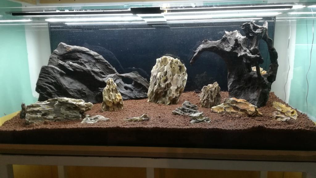 Nouvel aquarium 300l pour la maison - Page 3 Img_2037