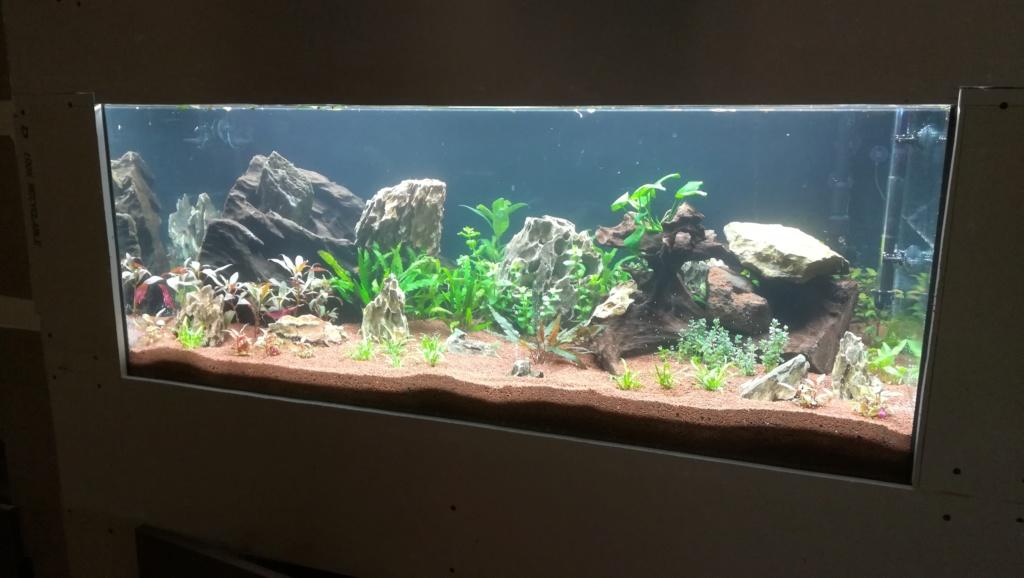 Nouvel aquarium 300l pour la maison - Page 4 Img_2046