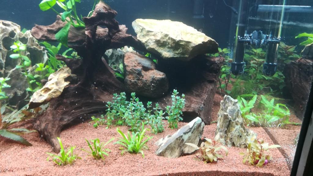 Nouvel aquarium 300l pour la maison - Page 4 Img_2047