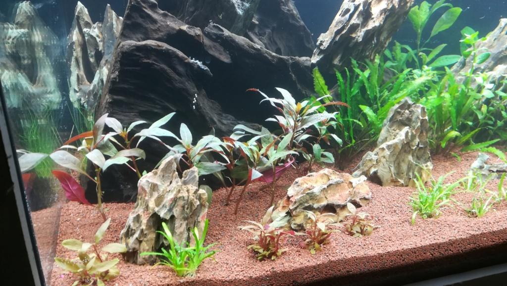 Nouvel aquarium 300l pour la maison - Page 4 Img_2048