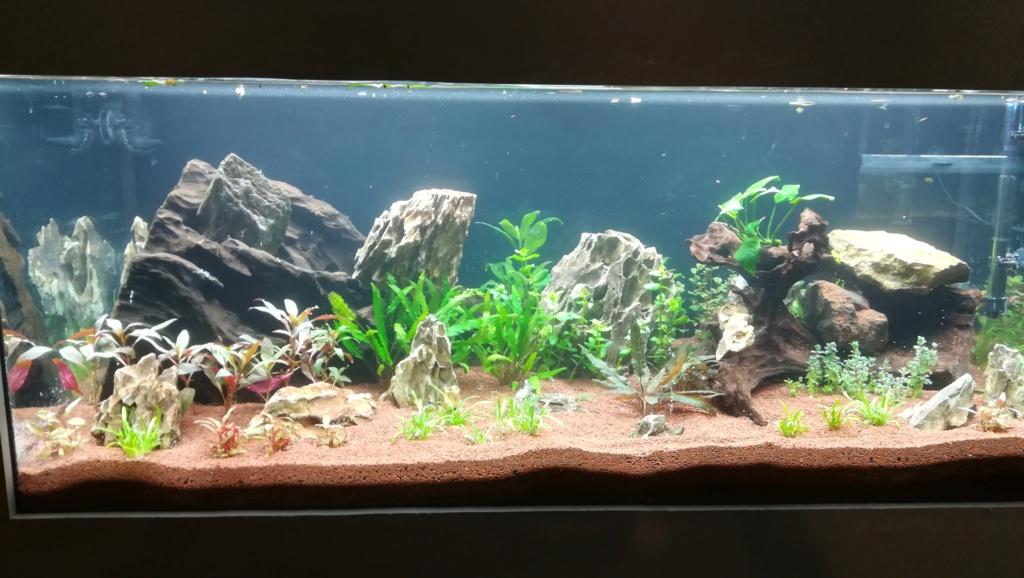 Nouvel aquarium 300l pour la maison - Page 4 Img_2049