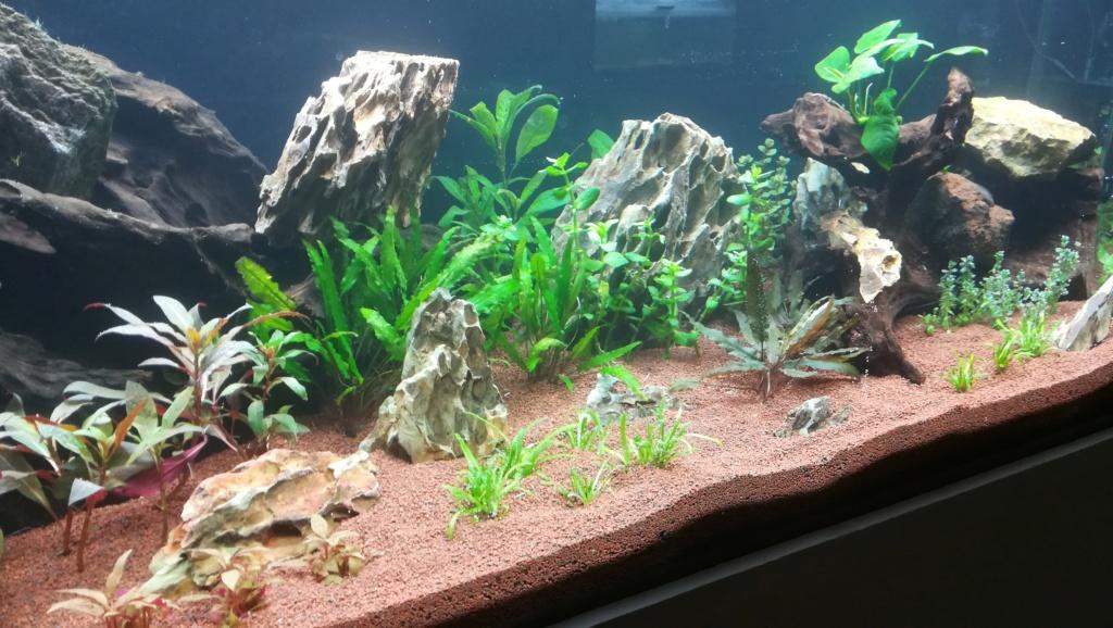Nouvel aquarium 300l pour la maison - Page 4 Img_2050