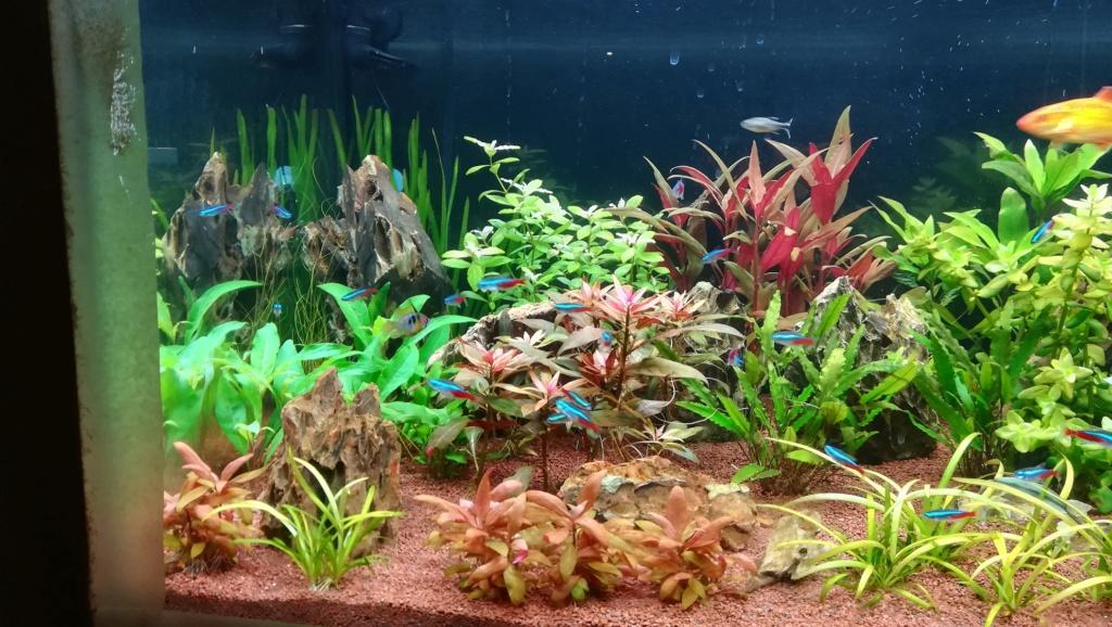 Nouvel aquarium 300l pour la maison - Page 4 Img_2051