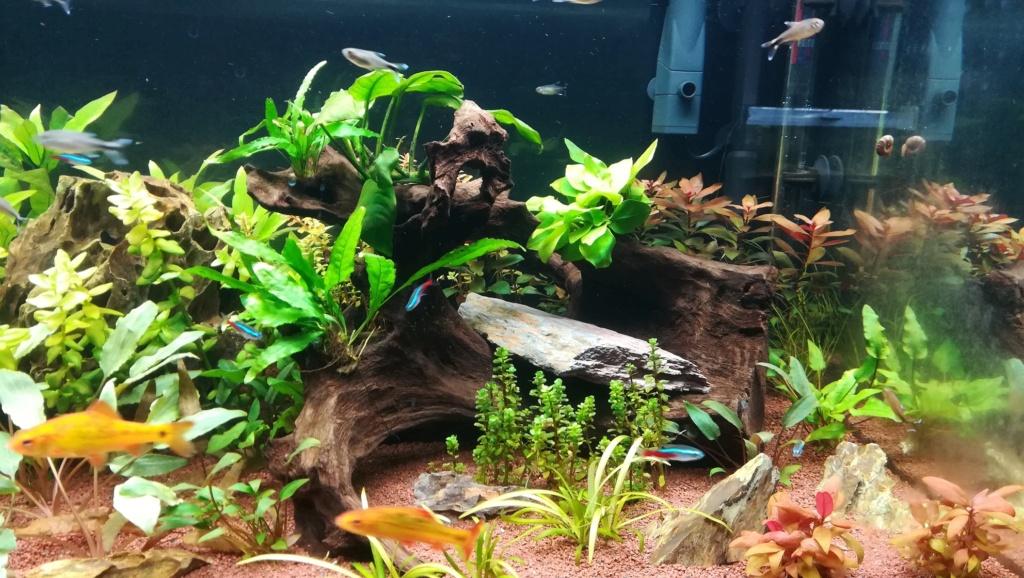 Nouvel aquarium 300l pour la maison - Page 4 Img_2052