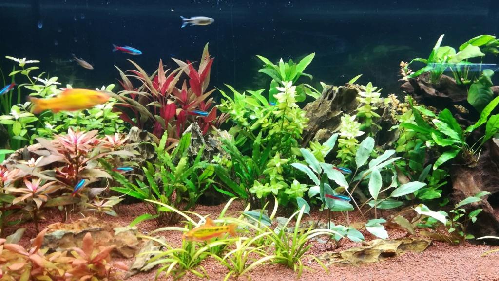 Nouvel aquarium 300l pour la maison - Page 4 Img_2053