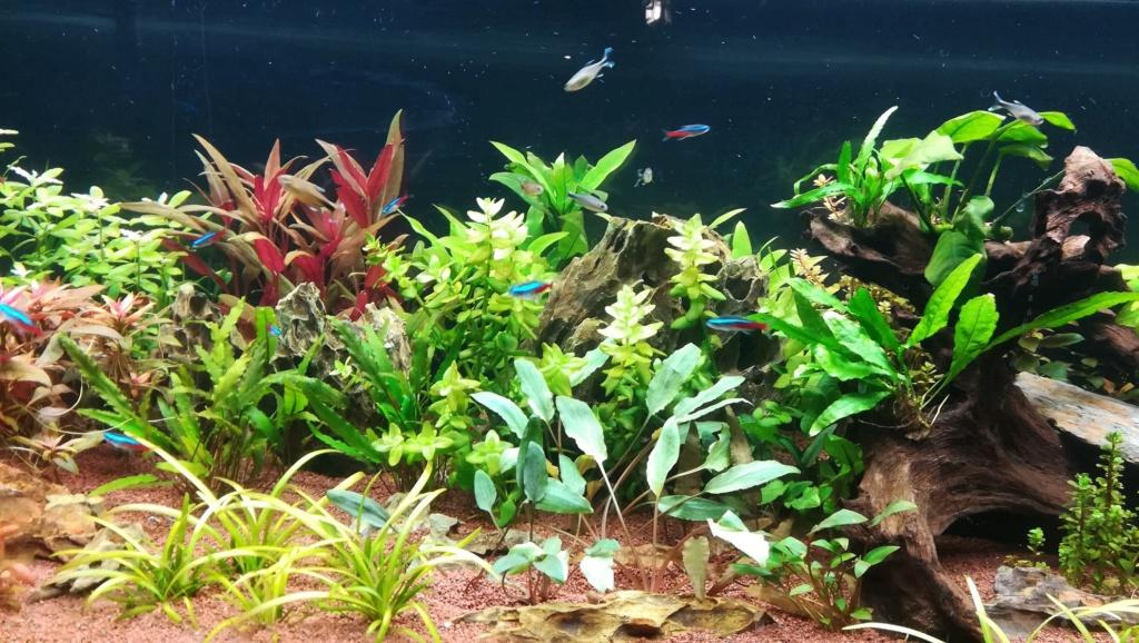 Nouvel aquarium 300l pour la maison - Page 4 Img_2054