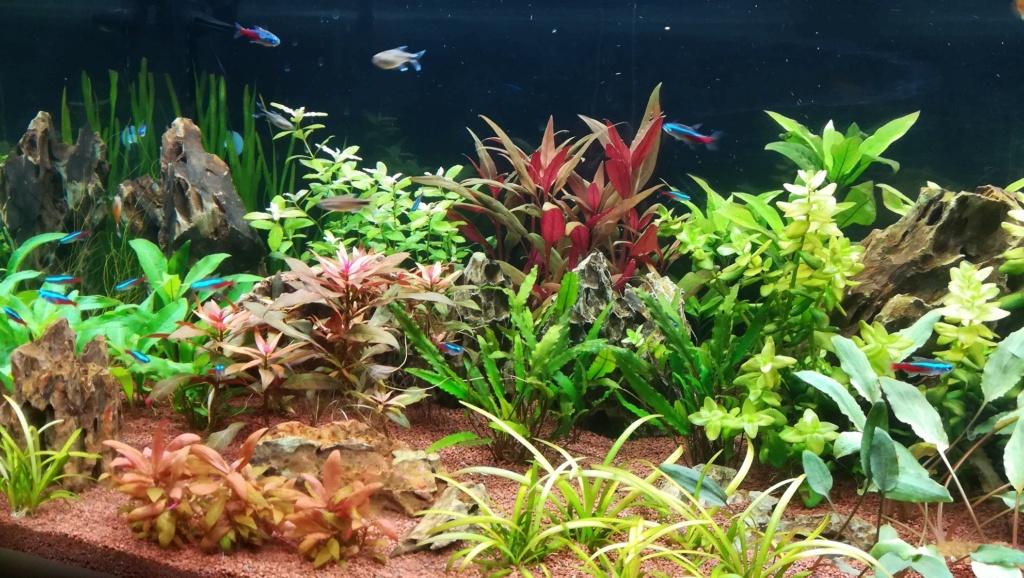 Nouvel aquarium 300l pour la maison - Page 4 Img_2055