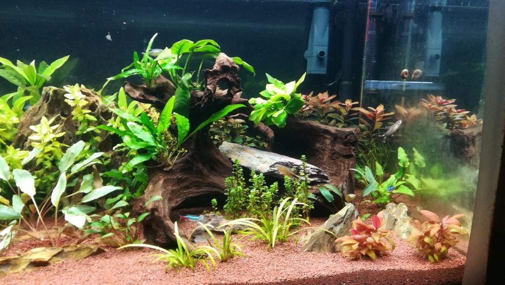 Nouvel aquarium 300l pour la maison - Page 4 Img_2056
