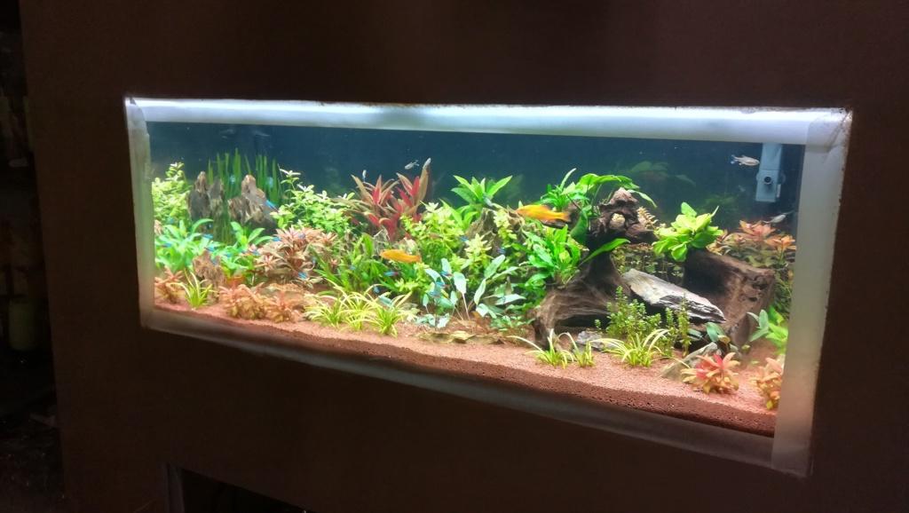 Nouvel aquarium 300l pour la maison - Page 4 Img_2057
