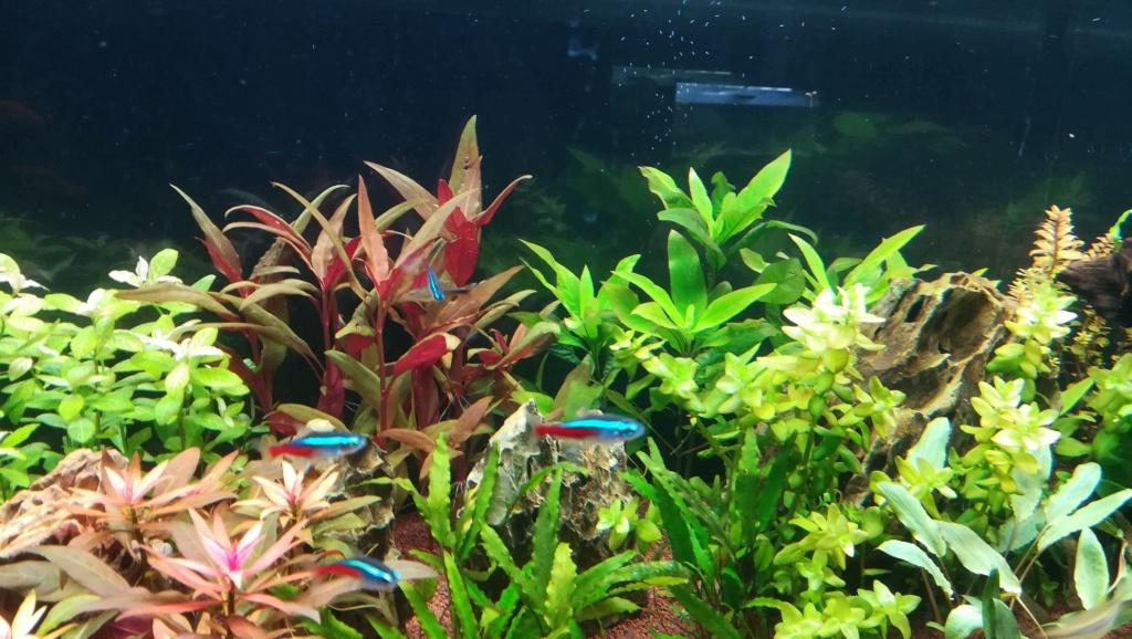 Nouvel aquarium 300l pour la maison - Page 4 Img_2058