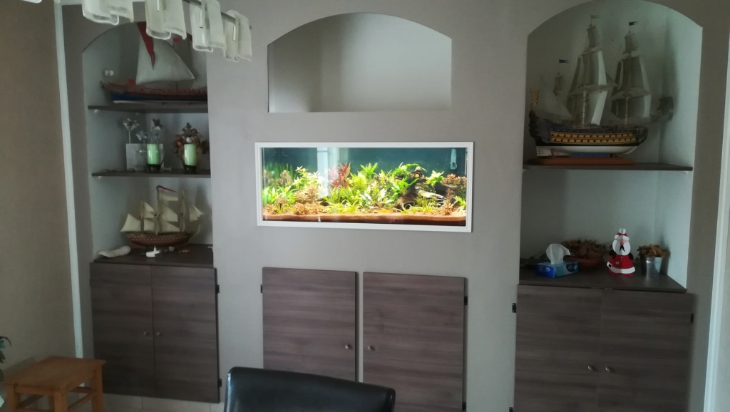 Nouvel aquarium 300l pour la maison - Page 5 Img_2060