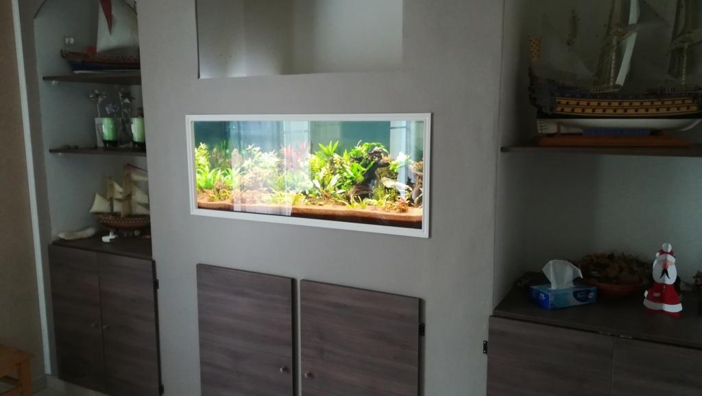 Nouvel aquarium 300l pour la maison - Page 5 Img_2061