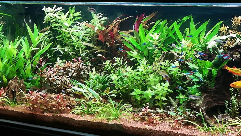 Nouvel aquarium 300l pour la maison - Page 5 Img_2062