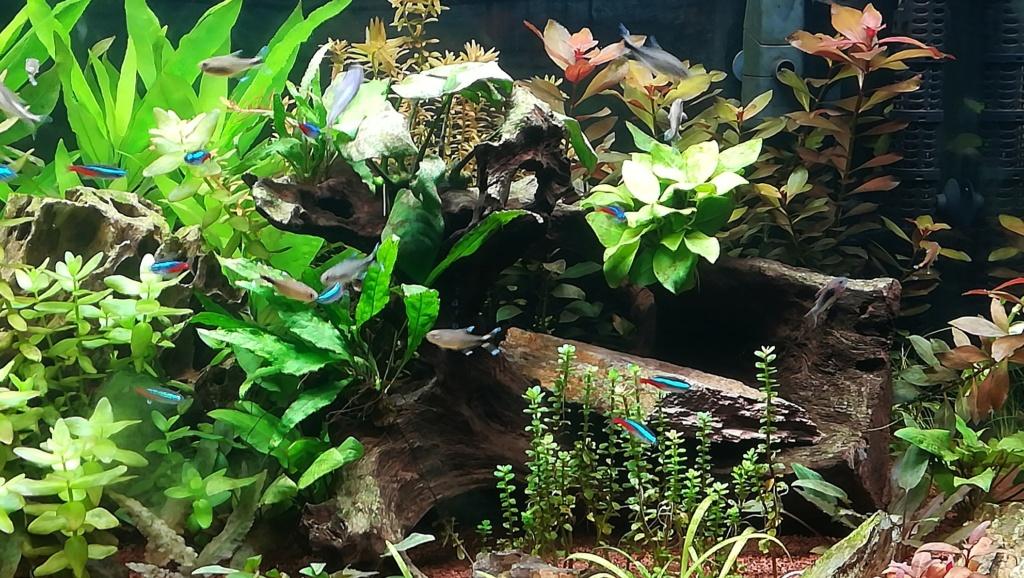 Nouvel aquarium 300l pour la maison - Page 5 Img_2063