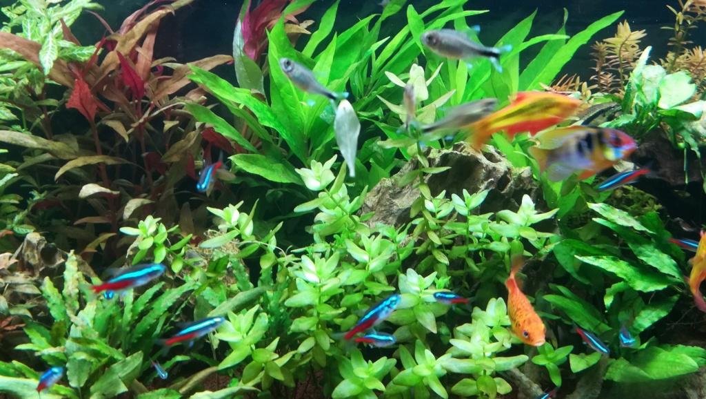 Nouvel aquarium 300l pour la maison - Page 5 Img_2065