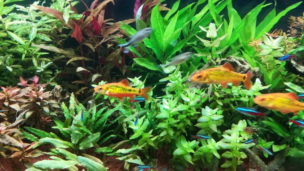 Nouvel aquarium 300l pour la maison - Page 5 Img_2066