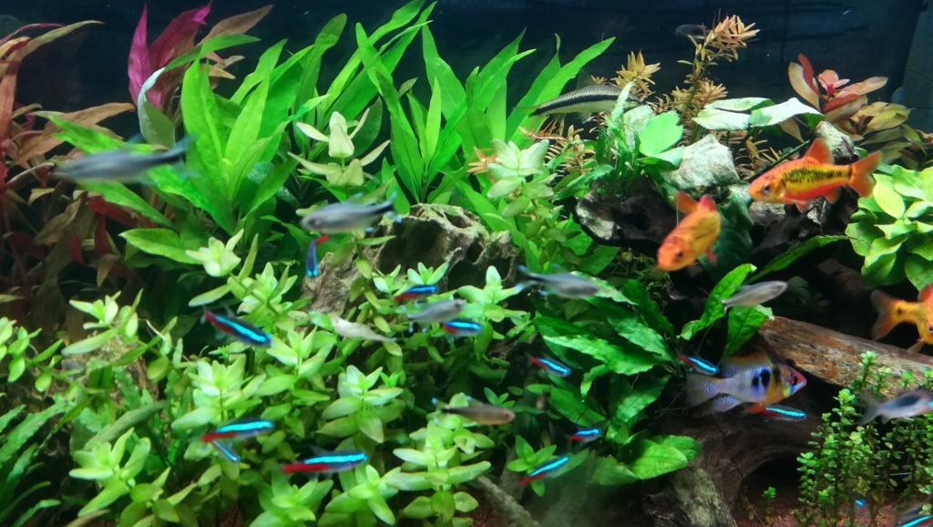 Nouvel aquarium 300l pour la maison - Page 5 Img_2067