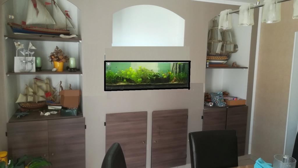 Nouvel aquarium 300l pour la maison Mut10